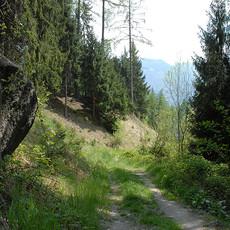 Der Steinhauser Waalweg
