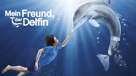 Mein Freund der Delfin